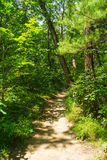 Dirt path through the woods. Royalty Free Stock Photography