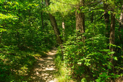 Dirt path through the woods. Stock Images