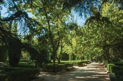 Dirt pathway passing through trees on a leafy garden in Madrid royalty free stock photography