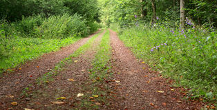 Dirt road. A dirt road in the mixed forest by Beckingen, Saarland - Germany, panorama - stitched Stock Photos