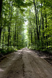 Dirt road. Flanked by forest trees Stock Photography