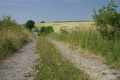 Dirt road. In summer Royalty Free Stock Image