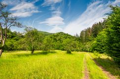 Dirt road through abandoned apple orchard. Lovely springtime scenery among forested mountains Royalty Free Stock Image