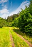 Dirt road through abandoned apple orchard. Lovely springtime scenery among forested mountains Stock Images