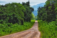 Rain forest close to Bale mountains royalty free stock image