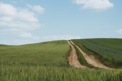 Dirt road across wheat field. Photo of Dirt road across wheat field royalty free stock photo