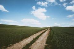 Dirt road across wheat field. Photo of Dirt road across wheat field royalty free stock photography