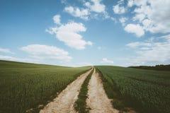 Dirt road across wheat field. Photo of Dirt road across wheat field stock images