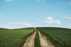 Dirt road across wheat field. Photo of Dirt road across wheat field stock photos