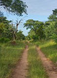Dirt road in the African Bush Royalty Free Stock Image