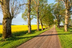 Dirt road alley Royalty Free Stock Photo