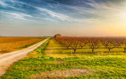 Dirt road along dormant orchards in winter. Agriculture in winter, cultivated fields, plowed land and rows of dormant orchards in Emilia Romagna, Italy Stock Photo