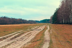 Dirt road along the forest Royalty Free Stock Photo
