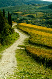 A dirt road along vineyards. Dirt road, vineyards and hills in the background Royalty Free Stock Photo