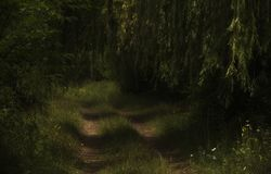 A dirt road amidst green grass and trees. In the hot mid-July, it is pleasant to walk along the dirt road among the shady green of trees on the edge of the Stock Photo