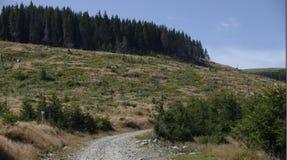 Dirt road, Apuseni Mountains, Romania Stock Photo