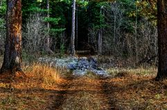 Dirt road in the autumn. Forest. Landscape panoramic view Stock Photos