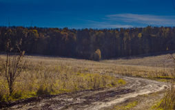 Dirt road in the autumn field Stock Image
