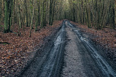 Dirt road in autumn forest. Royalty Free Stock Image