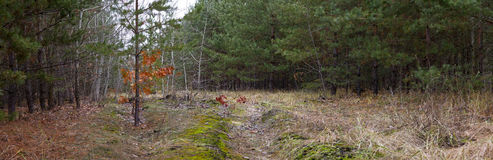 Dirt road in the autumn forest -- autumn landscape Stock Photos