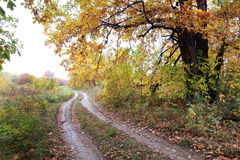 Dirt road in autumn forest Royalty Free Stock Image