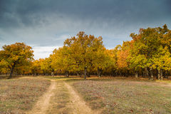 Dirt road and autumn forest Stock Images