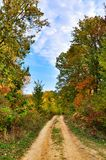 Dirt road in the autumn forest Stock Photography