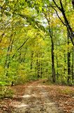 Dirt road in the autumn forest Royalty Free Stock Photos