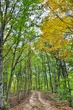 Dirt road in the autumn forest Royalty Free Stock Image