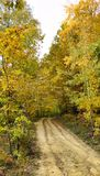 Dirt road in the autumn forest Stock Image
