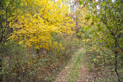 Dirt road in autumn forest. Fallen leaves lays on ground. Stock Photography
