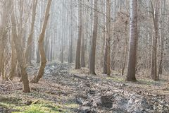 Dirt Road in the Autumn forest. Autumn Landscape Royalty Free Stock Image