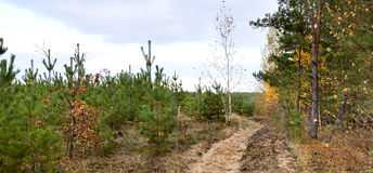 Dirt road in the autumn forest Royalty Free Stock Photography