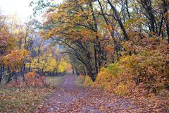 Dirt road in the autumn forest Stock Images