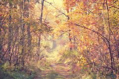 Dirt road in the autumn forest on a sunny day Stock Photos