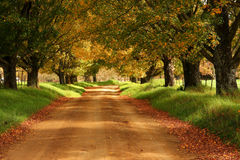 Dirt road through avenue of trees Royalty Free Stock Images
