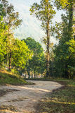 Dirt road with avenue of trees Royalty Free Stock Image