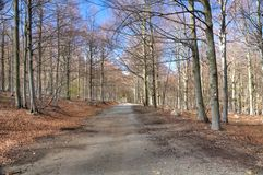 Dirt road in a beech wood in early spring Royalty Free Stock Photos