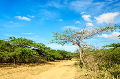 Dirt Road and Blue Sky Royalty Free Stock Image