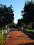 Dirt road bordered with lush trees. Long dirt road bordered with lush green trees and blue sky Royalty Free Stock Image