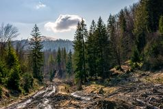 Dirt road through brutal deforestation area. Sad scenery of poor nature environment. summy springtime day in mountains with snowy peak Royalty Free Stock Image