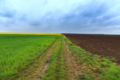 Dirt road and canola fields Stock Image