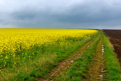 Dirt road and canola fields Royalty Free Stock Photography