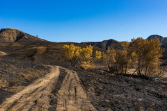 Dirt Road in Charred Land Stock Image