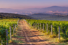 Dirt road through Chianti Vineyard. In the Tuscan Hills on a Summer Morning, Italy royalty free stock photo