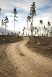 Dirt road in clearing Stock Photography