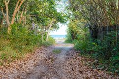 Dirt road coming to the beach next to trees and green vegetation. Wooden fence on the other side. Dirt road coming to the beach next to trees and green royalty free stock photography