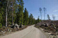 Dirt road in a coniferous forest Royalty Free Stock Photo