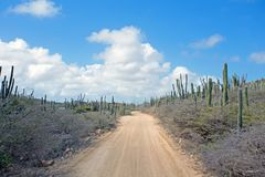 Dirt road in the countryside from Aruba island. Dirt road in the countrye from Aruba island in the Caribbean Royalty Free Stock Image