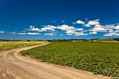 Dirt road in countryside. Scenic view of dirt road receding through countryside under blue sky and cloudscape, Willamette Valley, Oregon, U.S.A Royalty Free Stock Photography